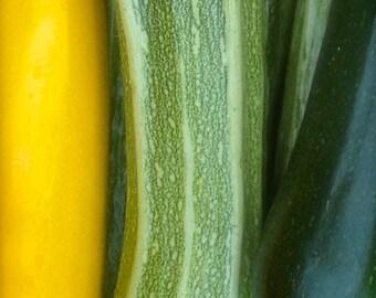 Organic Heirloom Romanesco Italian Striped Zucchini Seeds RARE