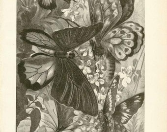 """Digital Download """"Butterflies"""" Illustration (c.1900s) - Instant Download Printable of Butterflies and Moths, Illustrated Insects"""