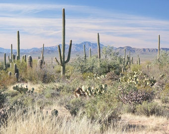Desert Photography Print Fine Art Arizona Saguaro Cactus Rustic Field Mountains Southwest Winter Landscape Photography Print.