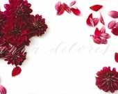 Styled Stock Photo, Flower Stock Product Photography, Floral Wreath Garland, Chrysanthemum, Purple Mums, Flower Border, Flower Stock Photo