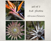 Exotic flowers, Nature photograph, African plants, African nature, Set of 3, Triptych, Flowers of Africa, Orange and Brown