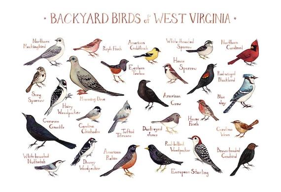 west virginia backyard birds field guide art print watercolor