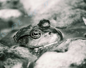 Black and white water FROG in  Lilly pond   5x7 photo greeting card, film photography