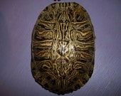 Real animal Red Ear Slider Turtle Shell part bone armor water taxidermy craft skull