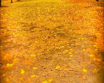 Chicago Autumn Park Scene Golden Urban Landscape. Signed Fine Art Photography Print