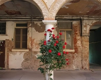 Venice Photography, Romantic Decor, Red Roses, Architectural Detail, Peach Decor, Photo of Flowers, Botanical Print, Italy Print, Wall Art