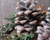 Montana woods Beeswax dipped Pine Cones Frasier Fir scent cabin decor rustic Christmas decor Montana made scented wax pine cones