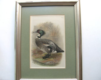 """Vintage print, Wood Duck in landscape, 13 and 1/"""" by 10 and 1/2"""""""