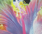 Set of Blank Note cards with Photos of Beautiful  Exotic Tropical Flowers