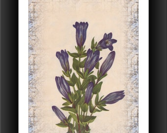 Ruff Gentian--Downloadable Vintage  Art Print