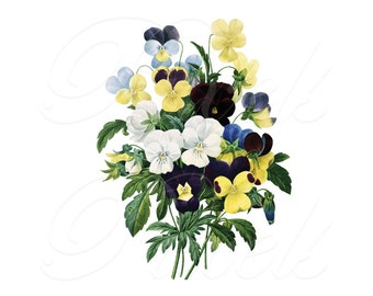PANSIES Instant Download wedding flowers large Digital Image in color, vintage flowers REDOUTE illustration 009
