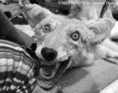 Creepy Animal Taxidermy, Fine Art Photo Print
