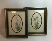 2 Watercolor Flower Prints Vintage  / Original Art Watercolor Iris Prints in Gold Frames by HHaynes