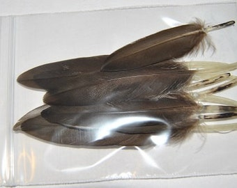 10 Small Dark Brown Duck Wing Feathers