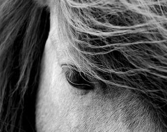 Equine art, black and white, horse photo, buckskin horse, icelandic horse, animal photo, horses eye