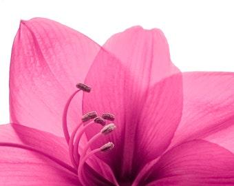 Botanical Photography, Flower Photography,  8x10 fine art print, pink, fuchsia, Chic, Elegant, Nature, Spa, Bathroom Decor, Bedroom Decor
