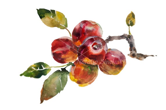 Red apple twig with fruit and leaves digital download from original watercolor garden illustration, fall painting autumn clipart