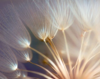 Dandelion Photography - Home Decor - Macro Photography - Still Life