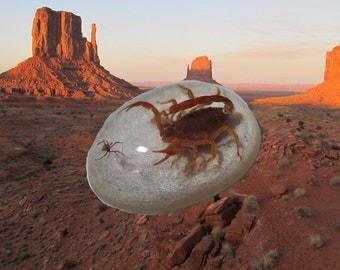 Arizona Scorpion and Spider Paperweight