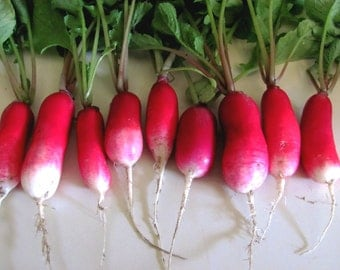 FRENCH BREAKFASH RADISH  Heirloom 100+ seeds