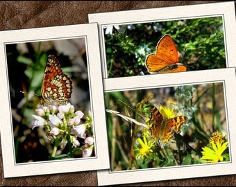 3 Butterfly Photo Note Card Set - 5x7 Butterfly Note Cards Handmade - Blank Note Cards With Envelopes - Photo Greeting Cards Handmade (BT5)