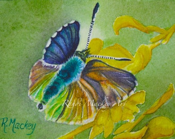 "Limited Edition ACEO print ""Purplish-Copper Butterfly"" 2.5"" x 3.5"""