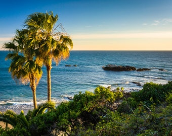 View of palm trees and the Pacific Ocean at Heisler Park, in Laguna Beach, California - Photography Fine Art Print or Wrapped Canvas