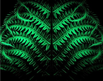 Green Botanical Art • Large Wall Art Print or Canvas • Green and Black Nature Art Fern Print