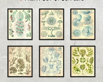 6 illustration set of mysterious sea life - home decor, wall art, vintage illustrations - FREE SHIPPING, 8x10, 11x 14.