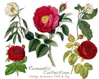 Flowers Clip Art - Vintage Botanical Flower Clip art - Roses Clip Art - Instant Download