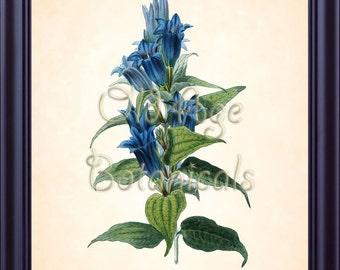 CLARK Antique Botanical Print Blue GENTIANA Floral 8x10 Art Print Vintage Plate Lithograph Flower Wall Decor Interior Design Wall Art BF0513