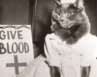 "8x10"" Satin Canvas Print, Give Blood, Kitty Dressed in Nurse Outfit, Cat, Feline"