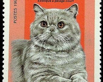 Exotic Shorthair Exotique a pelage court Cat -Handmade Framed Postage Stamp Art 17342