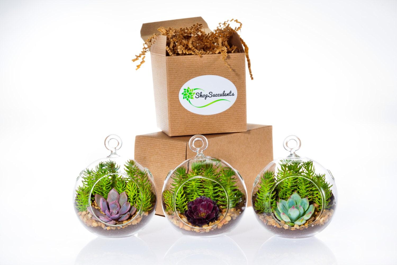 mini succulent garden trio terrarium terrarium kits hanging. Black Bedroom Furniture Sets. Home Design Ideas