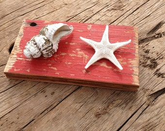 Mounted Sea Shell and Star Fish