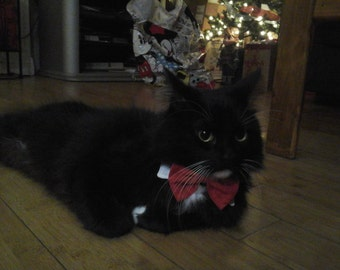 Fancy  white cat collar with red bow tie