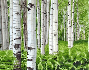 Stand of Birch, birch trees, forest, ferns, landscape, 13x19 fine art Giclee print made from original watercolor painting, unmatted