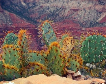 Grand Canyon Cactus