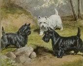 """Matted Vintage Dog Print """"Cairn Terrier, West Highland & Scottish Terrier"""" C. 1942 Matted 10x10"""" Vintage Decor"""