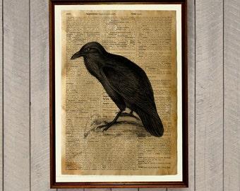 Crow poster Bird illustration Raven print WA146