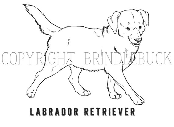 yellow lab coloring pages - photo #27