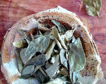 Curry Leaf - Organic