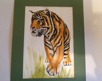 Tiger watercolour in a subtle green mount.