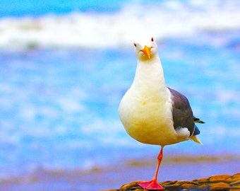 Seagull Photo Digital Download Photography Wall Art 12x12 / Photo of Seagull on One Leg / Seagull Photograph / Printable Home Decor