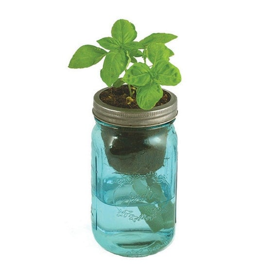 Mason Jar Herb Kit Self Watering Planter For By Modernsprout