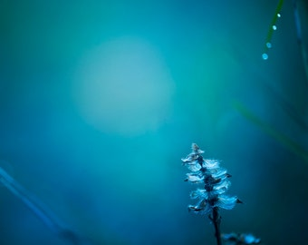 Dreamy Photography - Blue Wall Decor, Enchanted Forest Nursery, Blue Bedroom, Minimalist Art