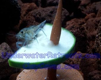 Saltwater food fish etsy for Bottom feeder aquarium fish