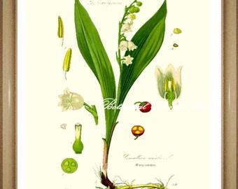 "Botanical Print. Lilly of the Valley. Flower Print. Flower Art. Botanical Wall Art. 8x10"""