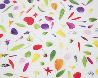 Flowers & Leaves Poster Print
