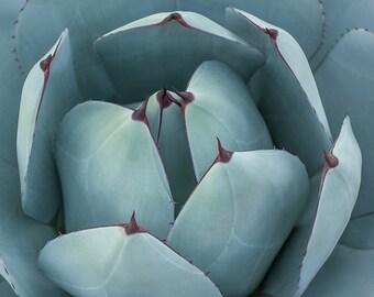 Teal Green Decor, Botanical Wall Decor, Fine Art Photography, Succulent Nature Photography - Teal Petals